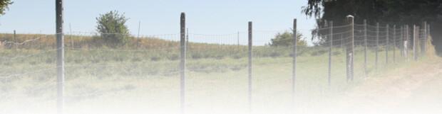Zaun – eine sichere Sache